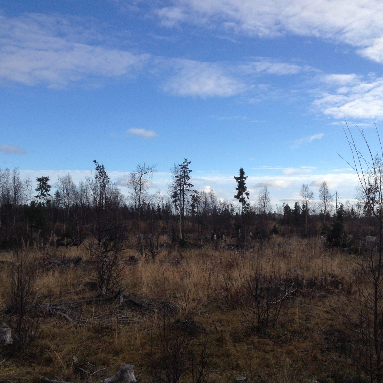 Traversée de la Suède du Nord